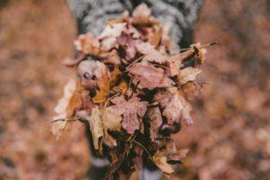 feuilles mortes à l'automne